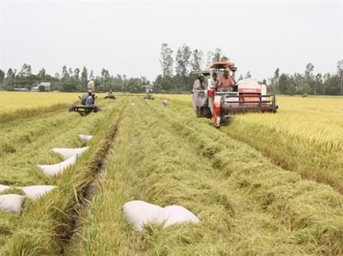 Des entraves pour les exportations de riz hinh anh 1