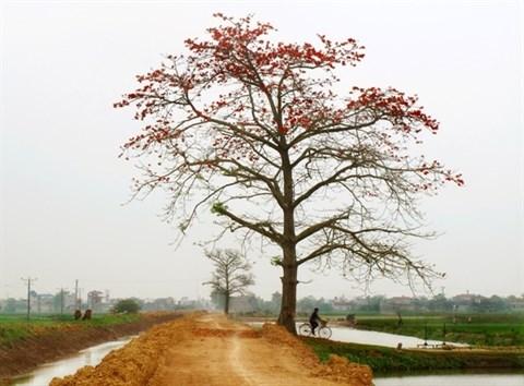Des faubourgs de Hanoi a la couleur rouge hinh anh 4