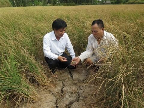 Le delta du Mekong, futur desastre ou terre d'opportunites? hinh anh 2