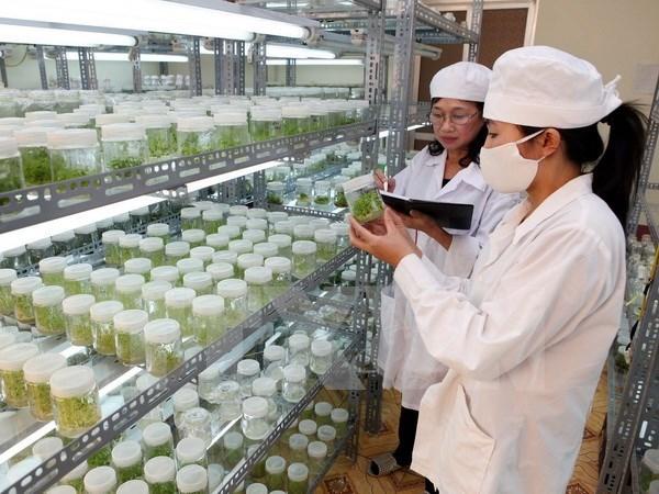 Seminaire sur la cooperation Vietnam-Japon dans l'agriculture hinh anh 1