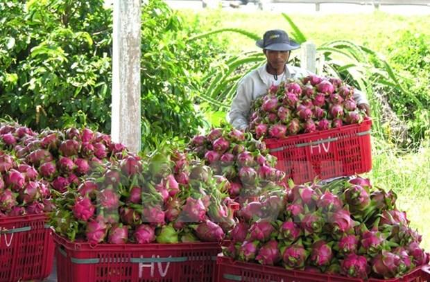 Fruits et legumes : plus de 2 milliards de dollars d'exportations en 2016 hinh anh 1