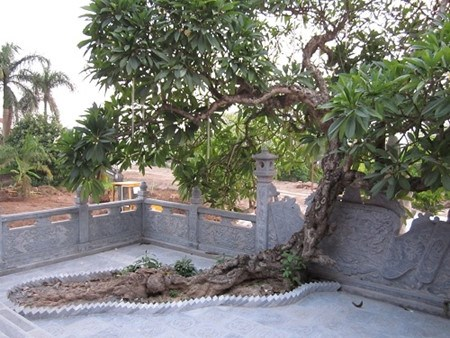 Cuong Xa - la pagode millenaire a Hai Duong hinh anh 4