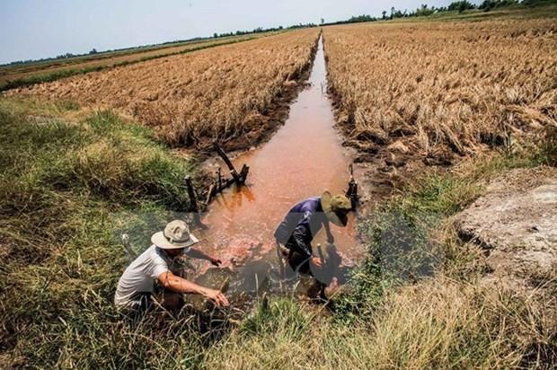 Secheresse et salinisation : deblocage d'une aide de pres de 4 milliards de dongs hinh anh 1