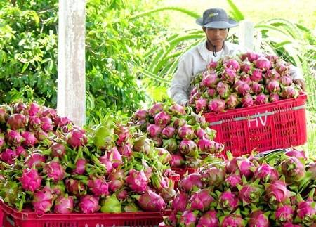 Accelerer l'exportation de fruits et legumes vers le marche americain hinh anh 1