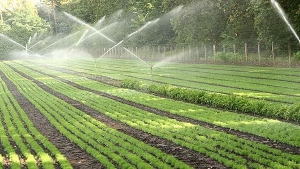 Ninh Thuan beneficie d'une technologie d'irrigation moderne hinh anh 1