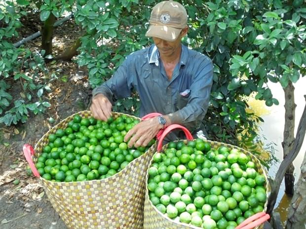 Exportation de citrons en Republique de Coree hinh anh 1