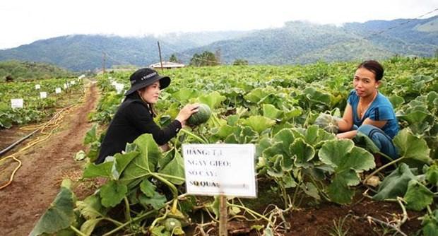 Cooperation vietnamo-australienne dans l'agriculture high-tech a Kon Tum hinh anh 1
