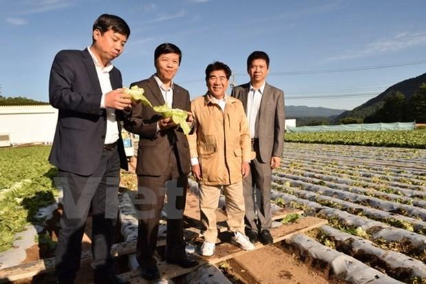 Kawakami, village japonais miraculeux dans l'agriculture, veut cooperer avec le Vietnam hinh anh 1