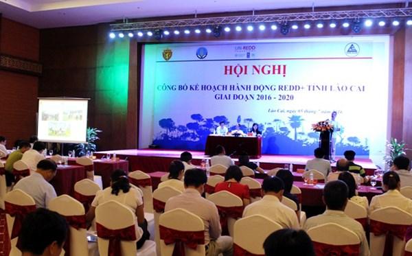 Lao Cai publie un programme d'action REDD+ hinh anh 1