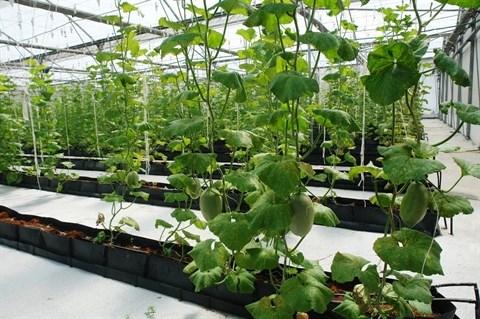 Application des technologies informatiques dans l'agriculture hinh anh 1