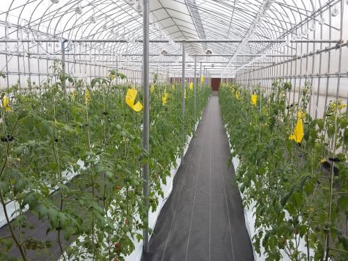Agriculture : le Japon evalue les opportunites d'investissement a Ha Nam hinh anh 1