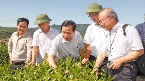 Les entreprises japonaises rencontrent les grands producteurs a Nghe An hinh anh 1