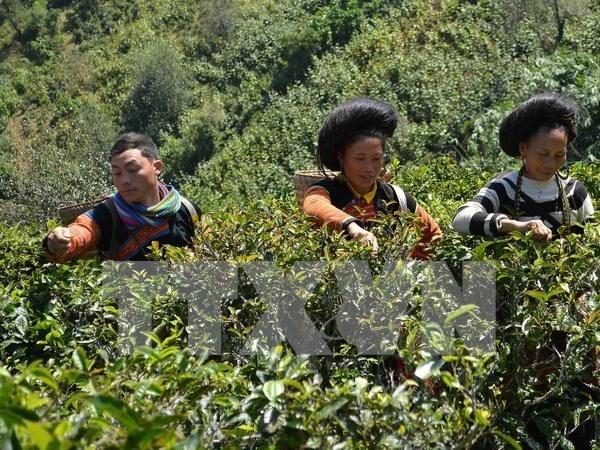 Renforcement de la competence de gestion du secteur de la microfinance hinh anh 1