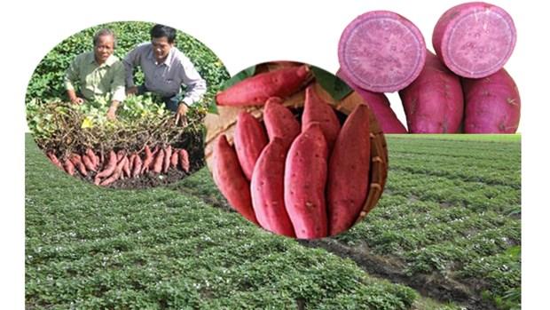 Pour accelerer l'exportation des produits agricoles vietnamiens vers l'Allemagne hinh anh 1