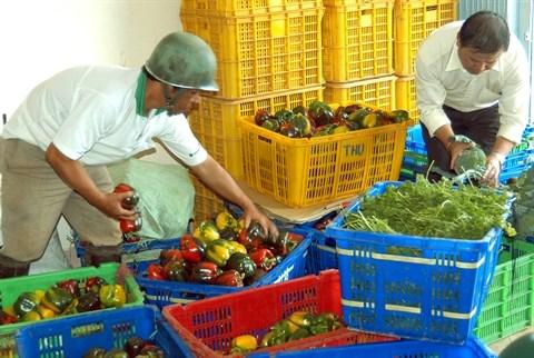 Belles perspectives pour les exportations de fruits et legumes hinh anh 2