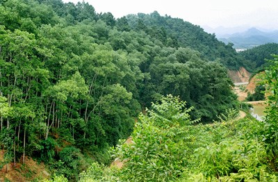 Thanh Hoa et Hua Phan (Laos) cooperent pour proteger les forets le long des frontieres hinh anh 1