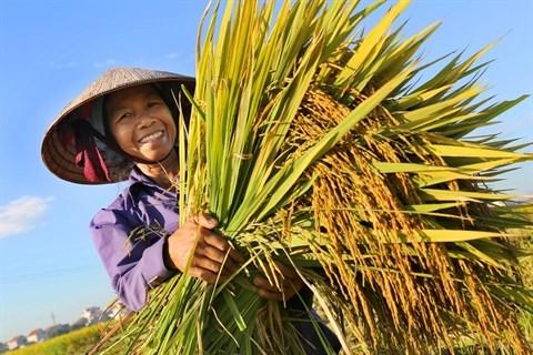 Notre bol de riz hinh anh 1