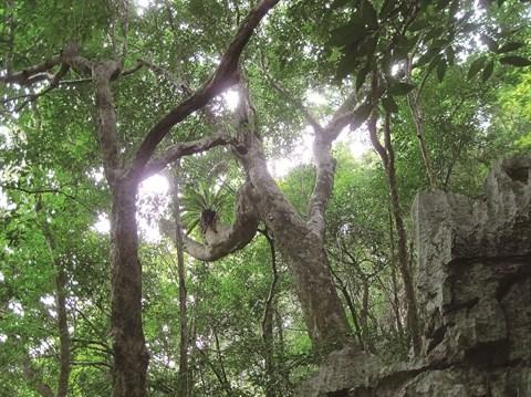 Ba Mun, un paradisiaque enfer vert hinh anh 3
