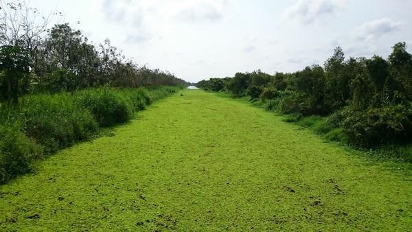 Mieux preserver et valoriser la Reserve de biosphere de Kien Giang hinh anh 1