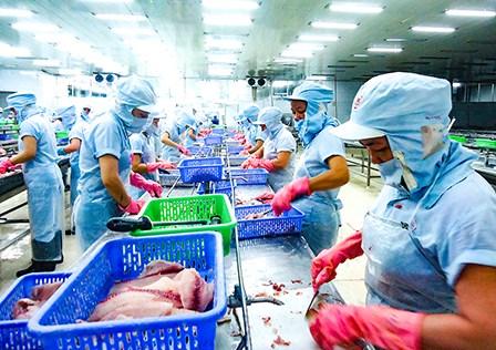 Le tilapia vietnamien s'exporte a un bon prix aux Etats-Unis hinh anh 1