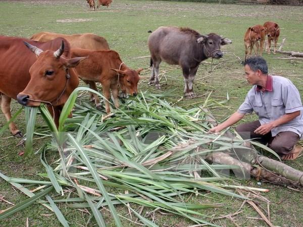 Gia Lai : 6000 familles beneficient d'un projet de reduction de la pauvrete hinh anh 1