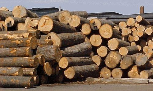 Forte baisse des importations de bois et d'ameublement hinh anh 1
