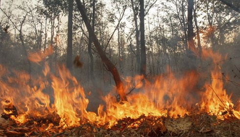 L'Indonesie en alerte contre les fumees d'incendies hinh anh 1