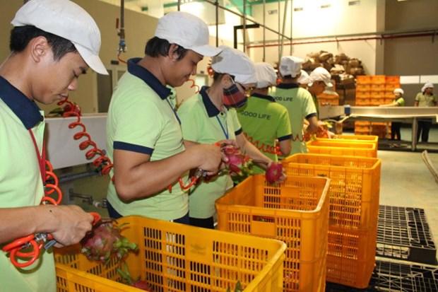 Inauguration de l'usine de transformation de fruits le plus grande du Nam Bo Occidental hinh anh 1