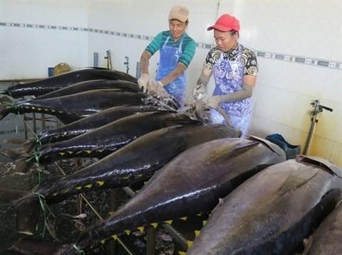Nouvelles perspectives pour le thon vietnamien hinh anh 1