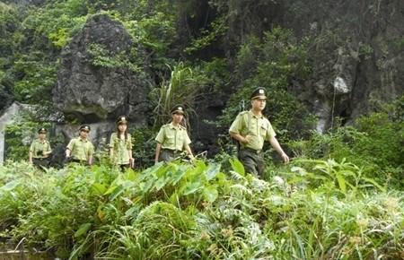 Vietnam et Laos renforcent la cooperation en matiere sylvicole hinh anh 1