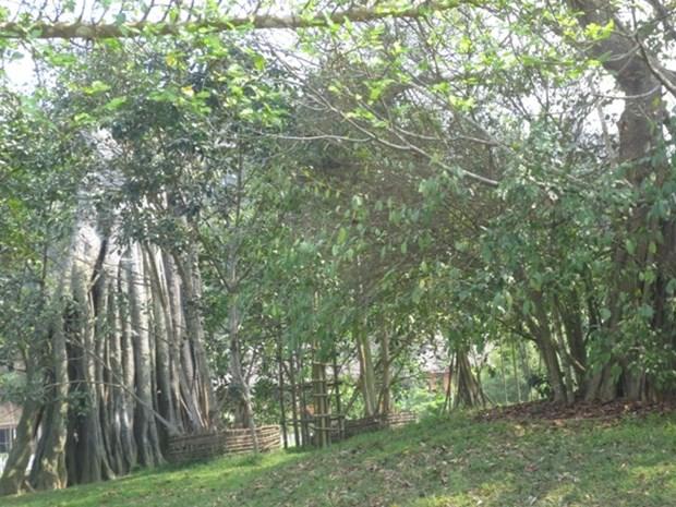 51.000 visiteurs etaient a la zone historique speciale de Tan Trao hinh anh 1
