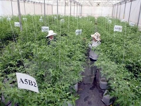 L'industrie agroalimentaire, nouvelle manne pour les entreprises etrangeres hinh anh 1