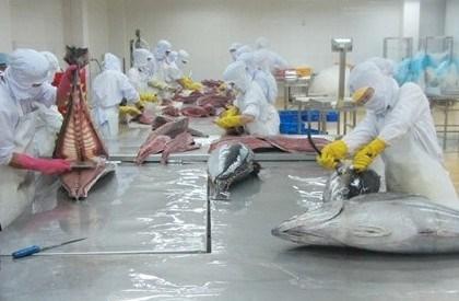 Les exportations nationales du thon poursuivent sur leur lancee hinh anh 1
