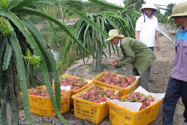 L'Australie peut importer des fruits du dragon et des crevettes vietnamiens hinh anh 1