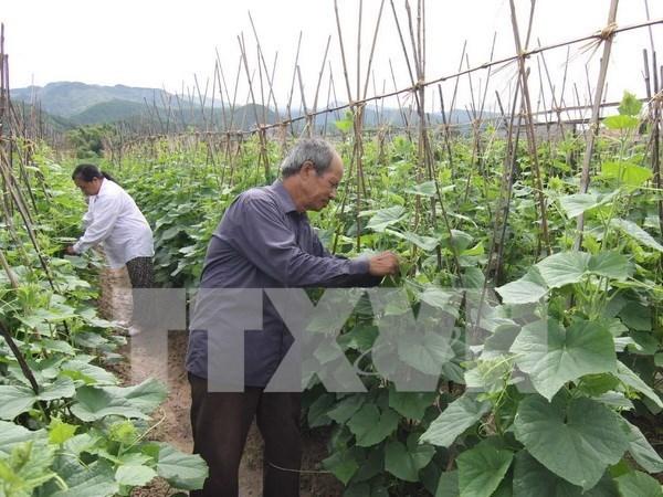 Developper durablement l'agriculture dans le processus d'integration a l'ASEAN hinh anh 1