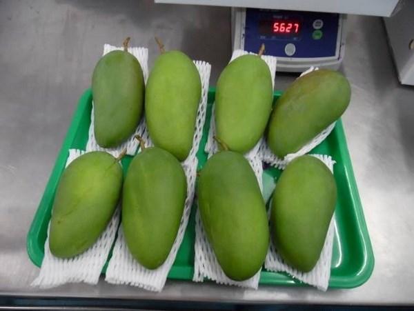 Les premieres mangues fraiches du Vietnam vendues en Australie hinh anh 1