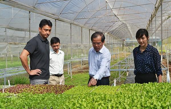 Le Japon investit dans un projet de culture de legumes bio a Binh Dinh hinh anh 1