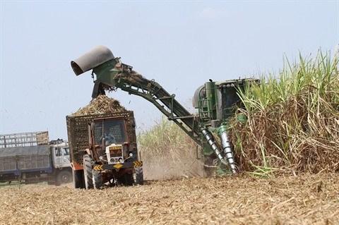 Pour la durabilite de la culture de la canne a sucre hinh anh 2