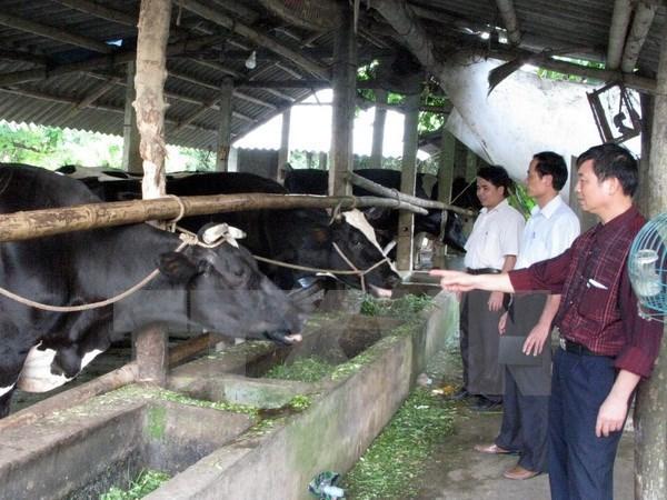 Vietnam-Belgique: la cooperation Gembloux-Vietnam dans le developpement rural hinh anh 1
