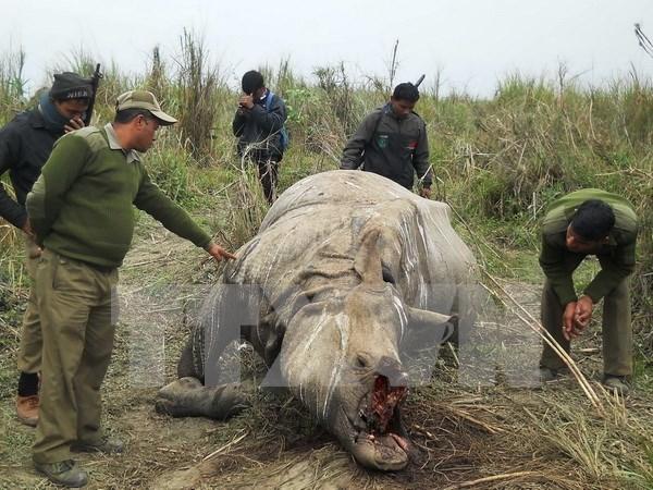 Especes sauvages : le Vietnam a d'ores et deja des contributions actives a la CITES hinh anh 1