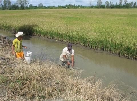 Le delta du Mekong attend les crues hinh anh 1