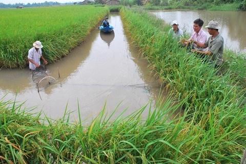 Le delta du Mekong attend les crues hinh anh 2