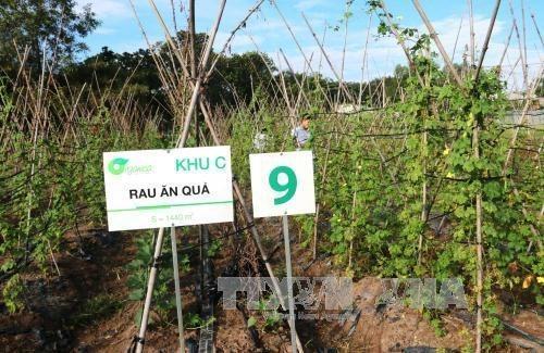 Agriculture high-tech : Tay Ninh va choisir le Japon comme partenaire hinh anh 1