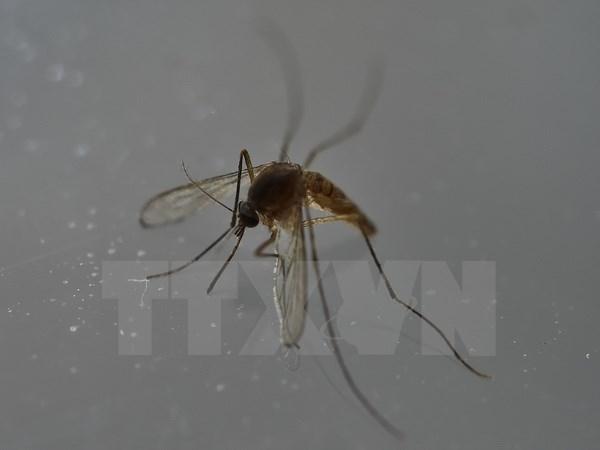 Les Philippines recensent deux nouveaux cas de Zika hinh anh 1