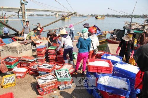 Les reserves de poissons de mer du Vietnam atteignent pres de 4,2 millions de tonnes hinh anh 1