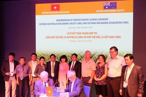 Industrie du macadamia : le Vietnam et l'Australie se serrent la main hinh anh 1