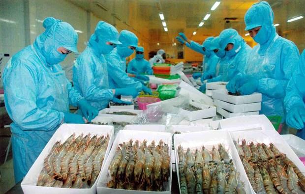 Les exportations de crevettes devraient atteindre 3,1 milliards de dollars en 2016 hinh anh 1