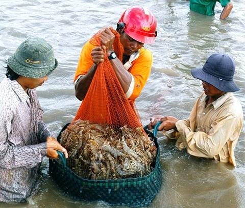 Creer un label pour les crevettes vietnamiennes hinh anh 1