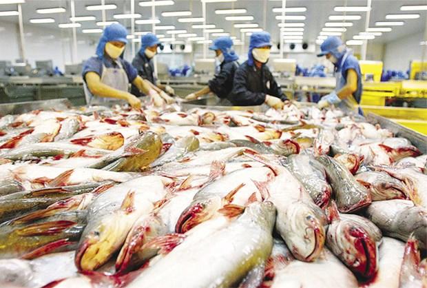 La Chine, 2e importateur de pangasius du Vietnam hinh anh 1