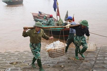 Le marche aux poissons de Giao Hai hinh anh 2